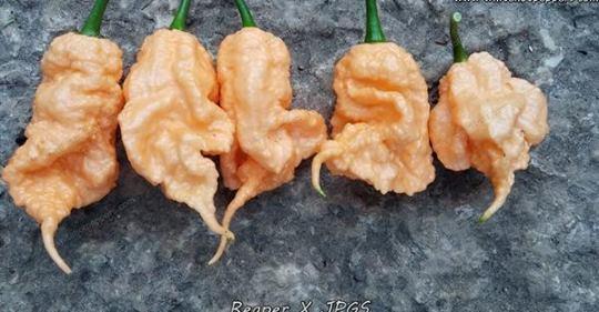 reaper x peach scorpion.jpeg