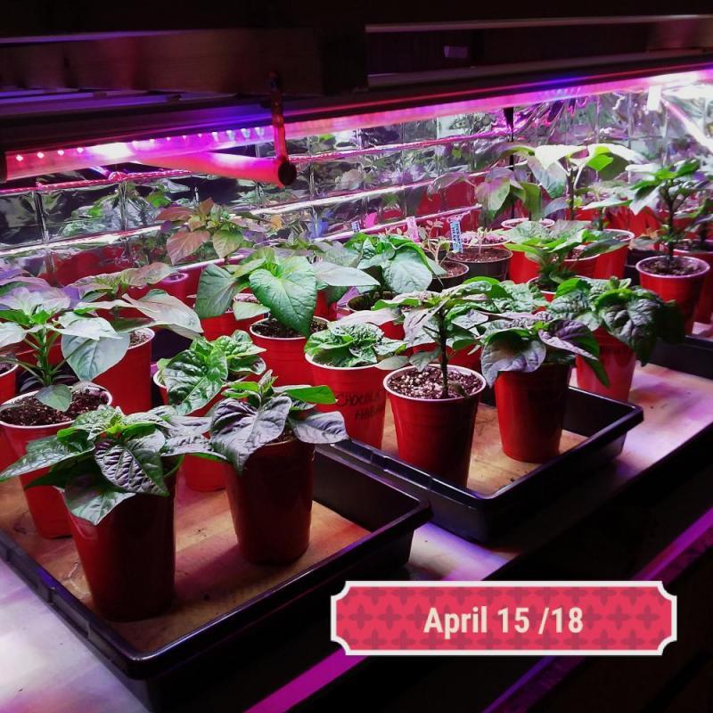 plants april 15 18.jpg