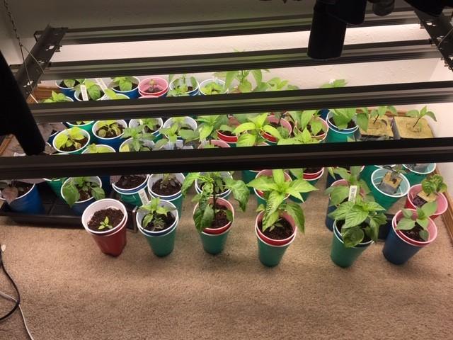 plants 4-22.jpg