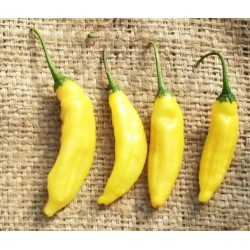 aji-amarillocontainer-gardening_10147_250x250.jpg