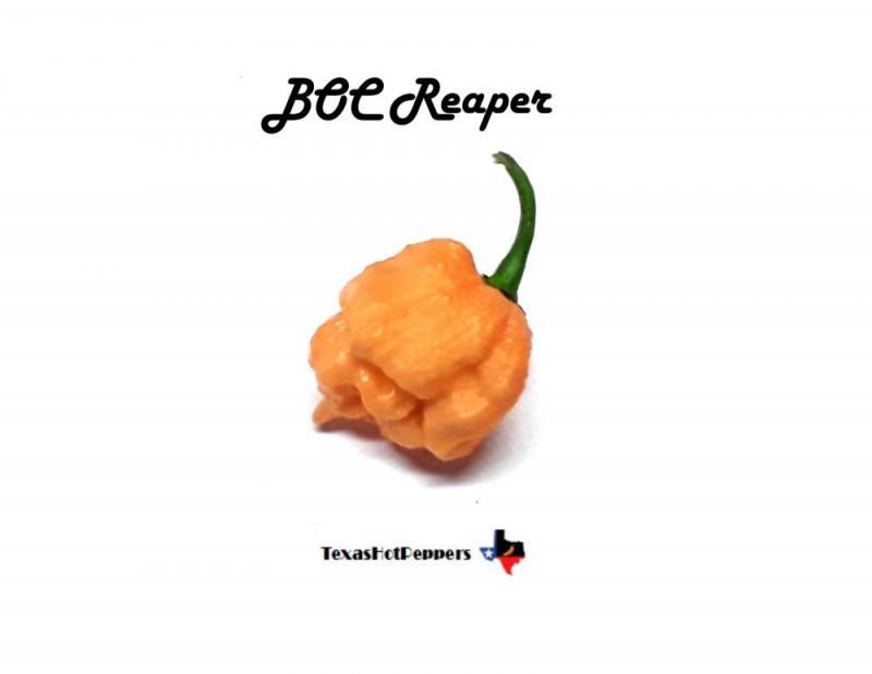 BOC Reaper.jpg