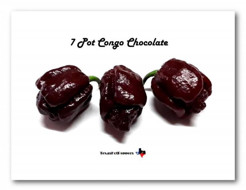 7 Pot Congo Chocolate.jpg