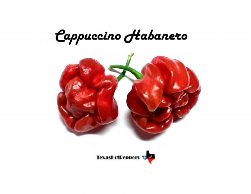 cappuccino hab.jpg