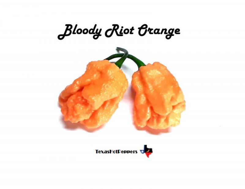 Bloody Riot Orange.jpg