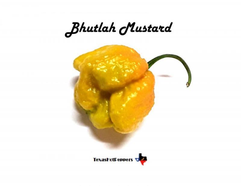 Bhutlah Mustard.jpg