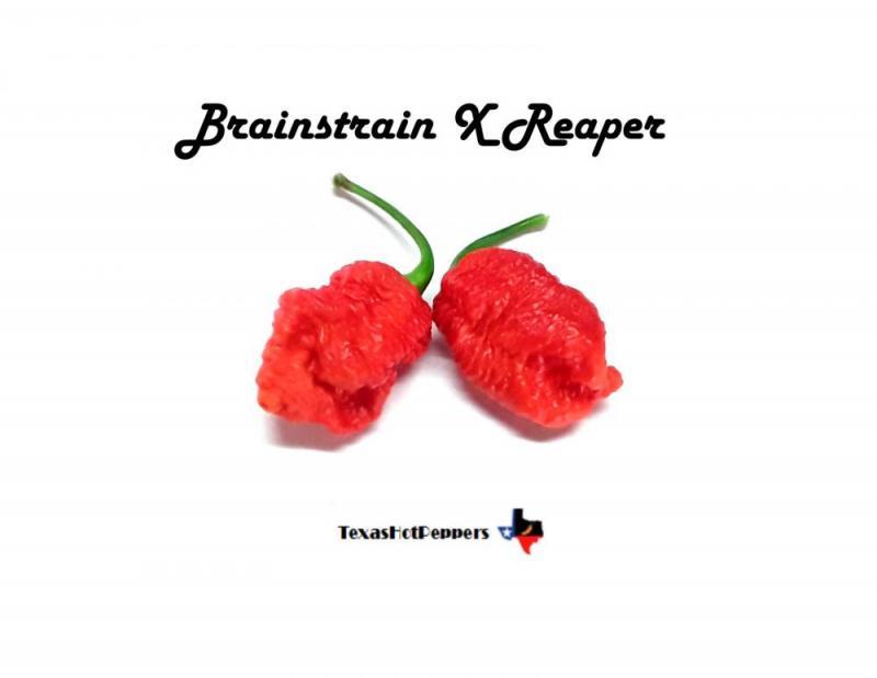 Brainstrain x Reaper.jpg