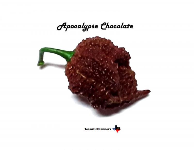 Apocalypse Chocolate.jpg