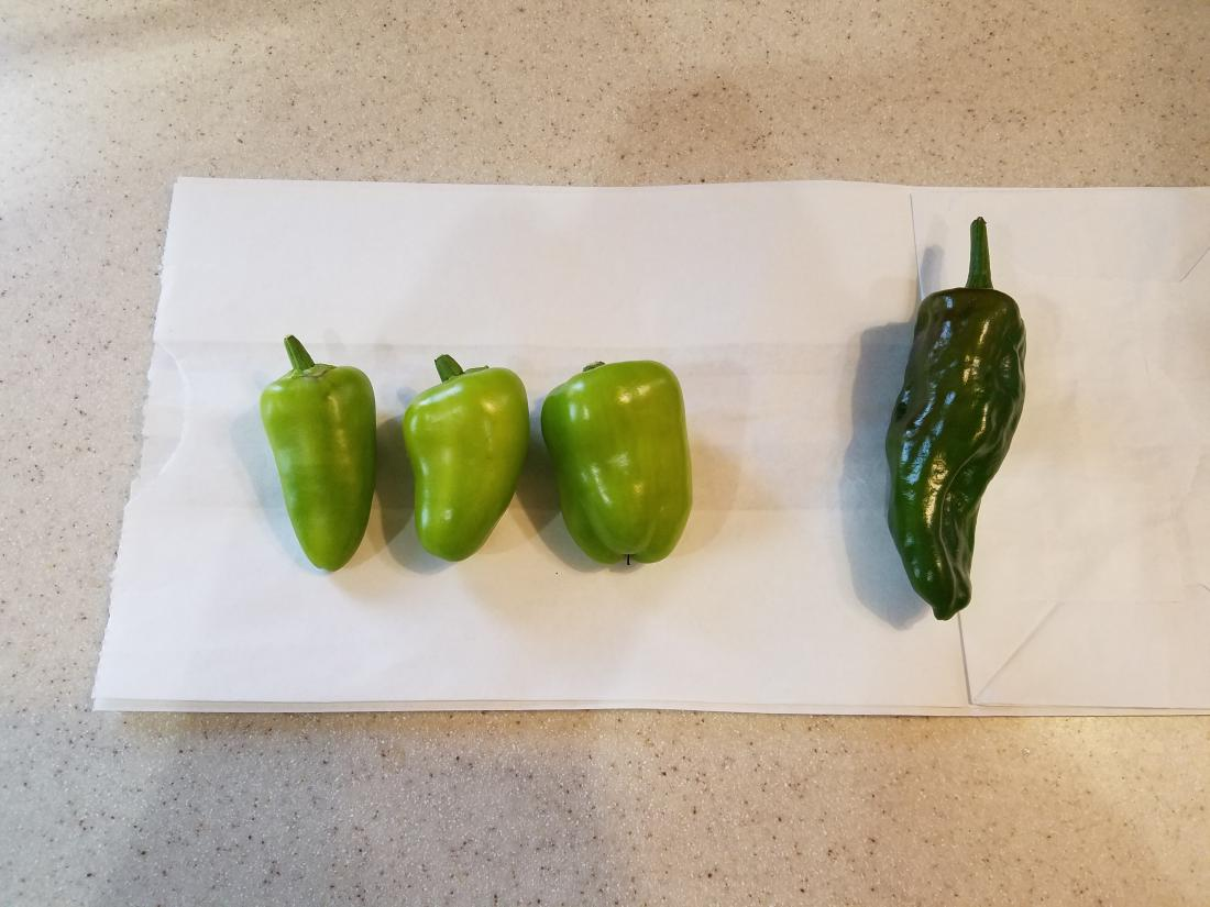 how to grow fresno peppers