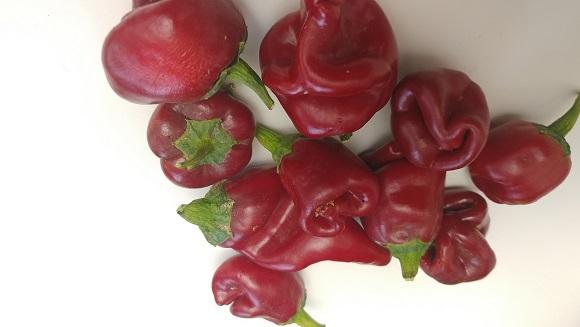 mystery pepper.jpg