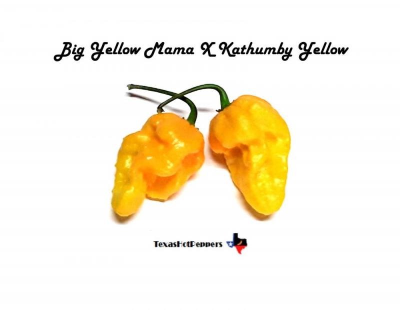 Big yellow mama X Kathumby Yellow.jpg