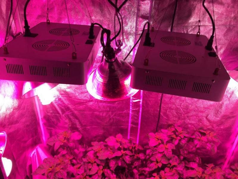 grow-tent-lights-02.jpg