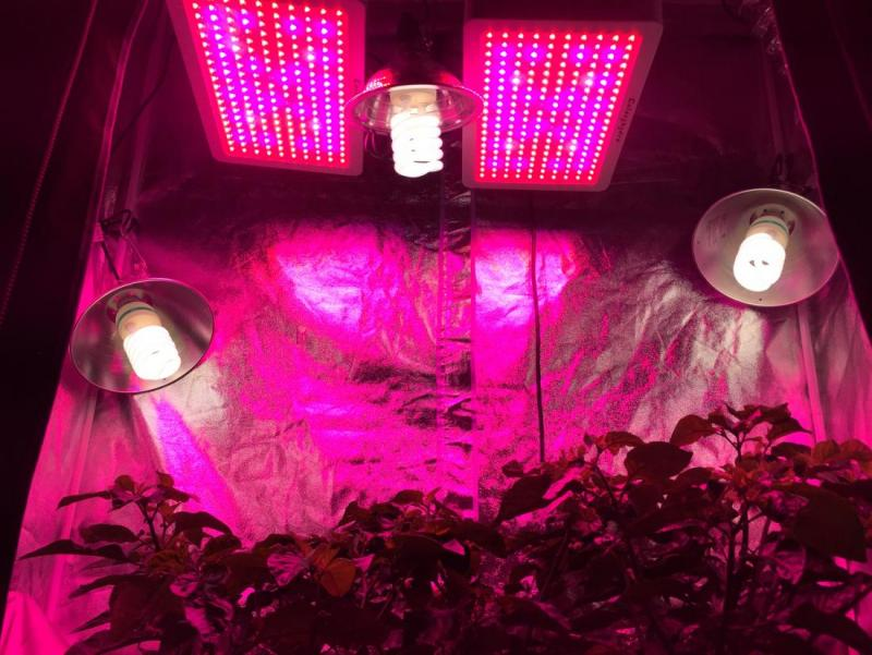 grow-tent-lights-01.jpg