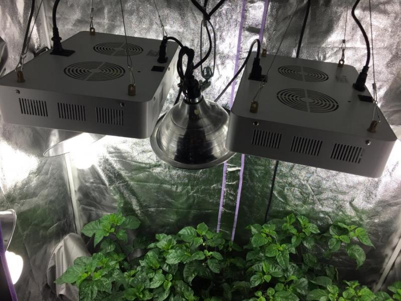 grow-tent-lights-03.jpg