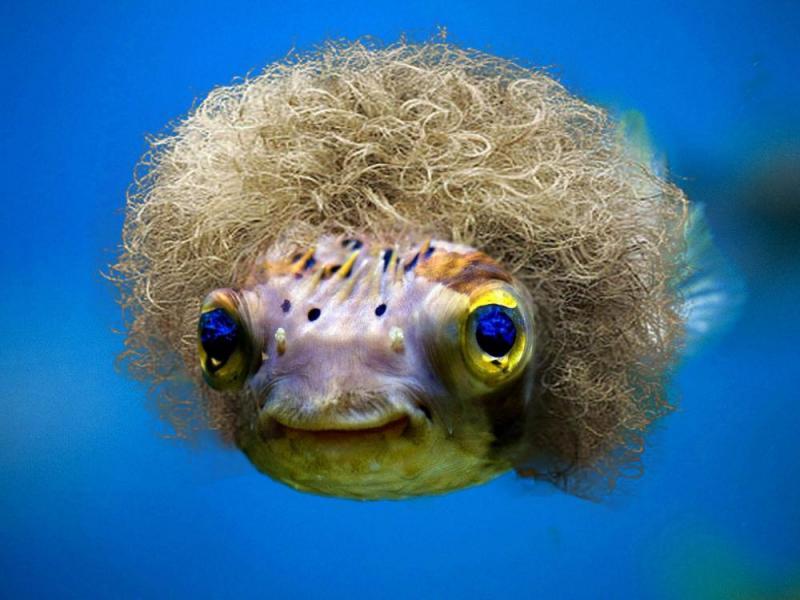 fish_wig.jpg